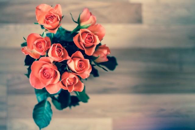 roses-690085